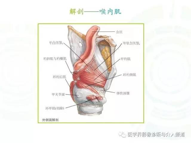 咽喉解剖,人手一份