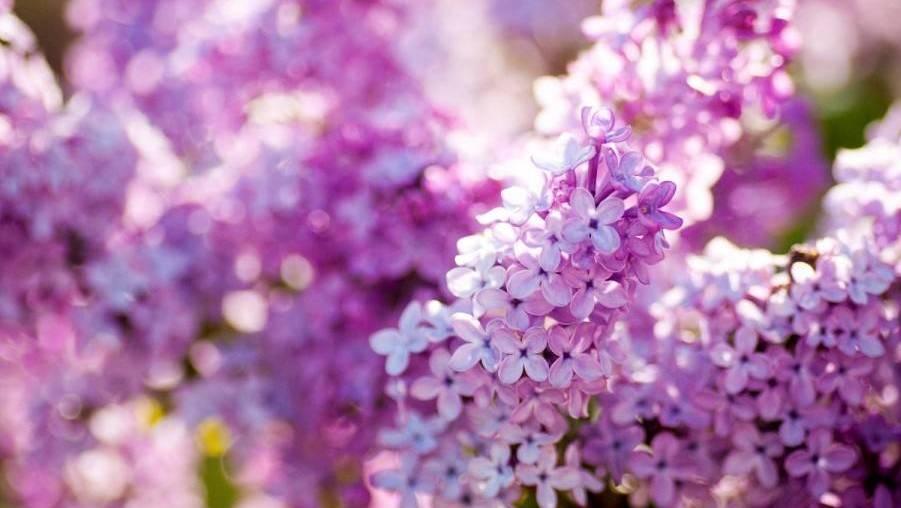 头条 最美人间四月天,为宁夏的春天绘一份花谱