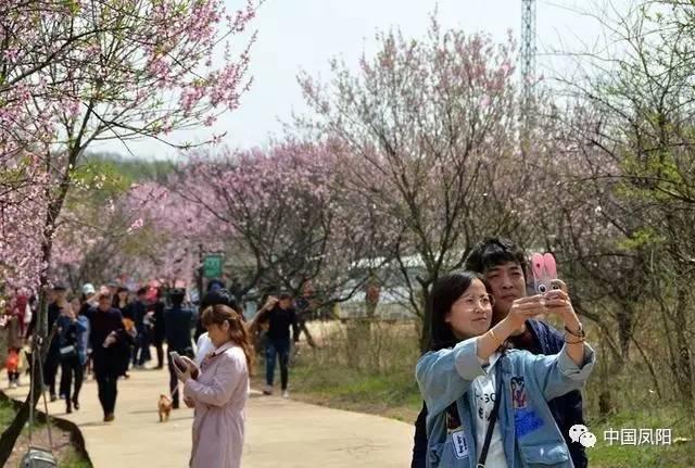 古寺桃林迷谷…凤阳清明游客爆棚图片
