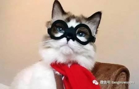 不给猫咪绝育会怎样图片