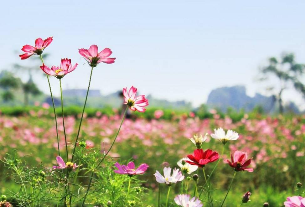 最美人间四月天,为宁夏的春天绘一份花谱