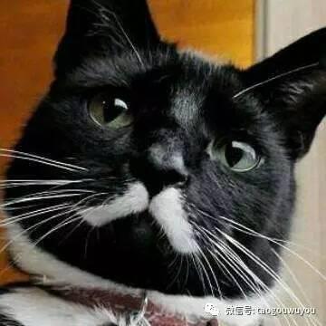 不给猫做绝育可以吗图片