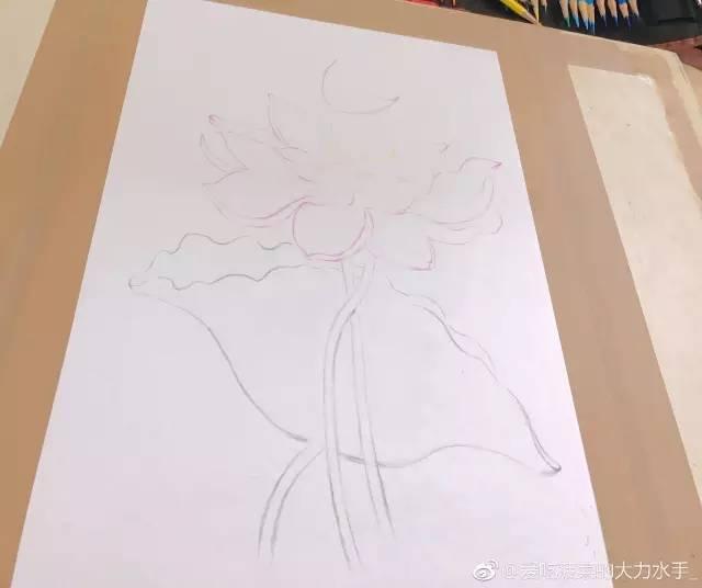 彩铅手绘荷花欣赏