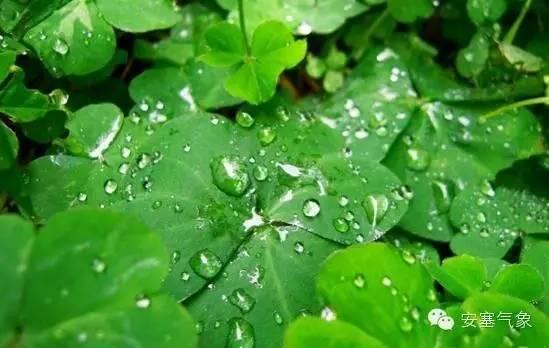 安塞区重要天气报告 降水降温消息