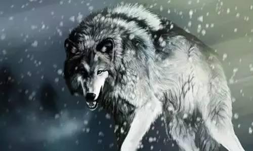 人就像狼一样,应该充满血和勇气