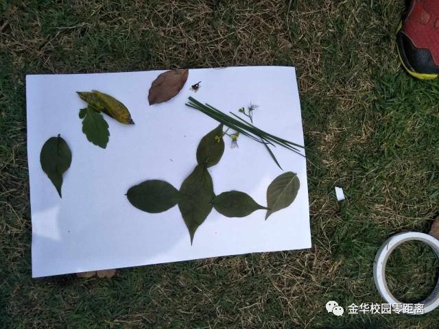 小朋友随手从草地上捡起的树叶和花瓣,就把它们拼凑成了眼里的春天图片