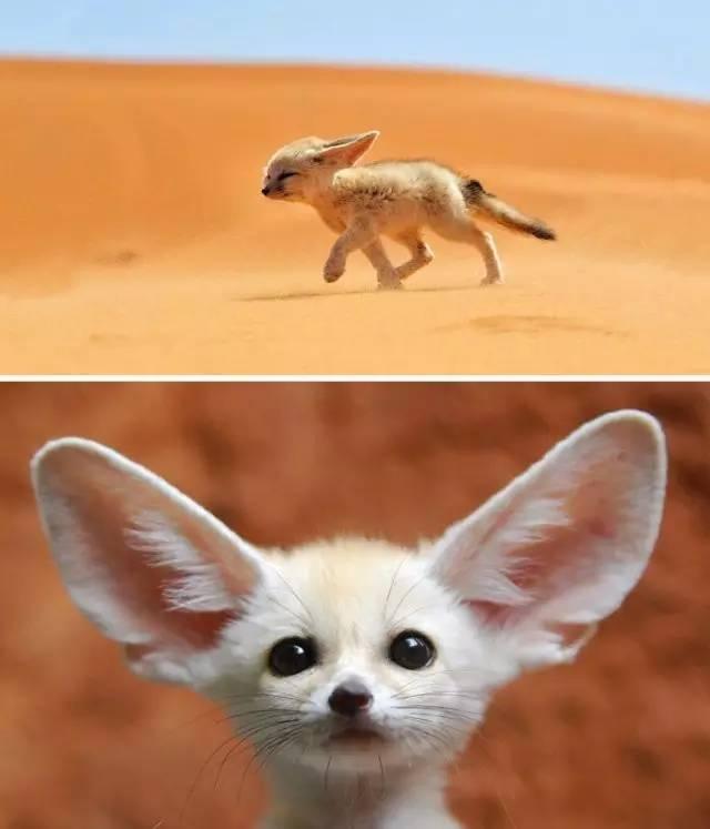 罕见的作文动物,每只都萌到让你的心融化!恐龙世界作文想象宝宝500字图片