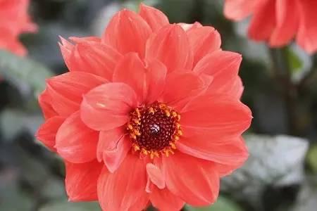 四月赏花季,各种西班牙语花卉词汇学起来!