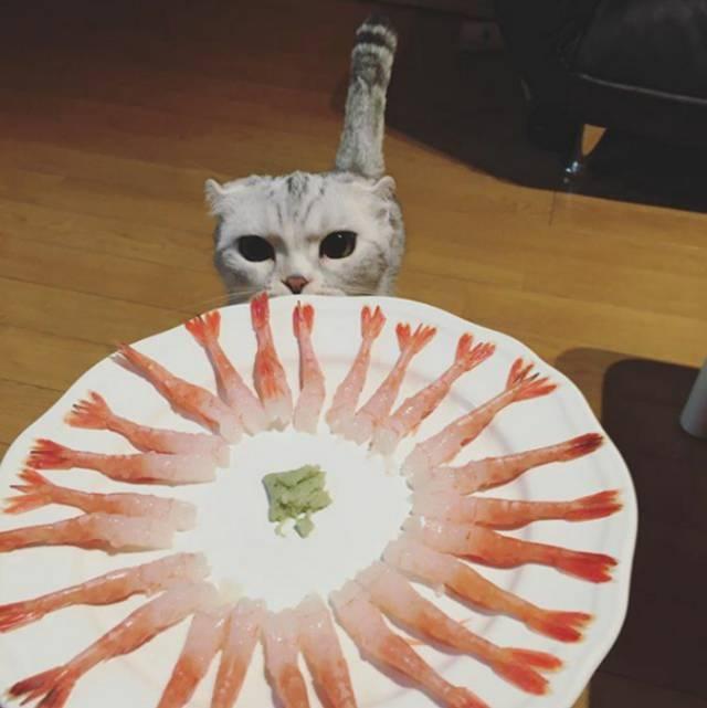 一只在ins圈粉35万的小猫猫,拥有世上最大的眼睛,让人忍不住揉腻他! - 浪浪云 - 仰望星空