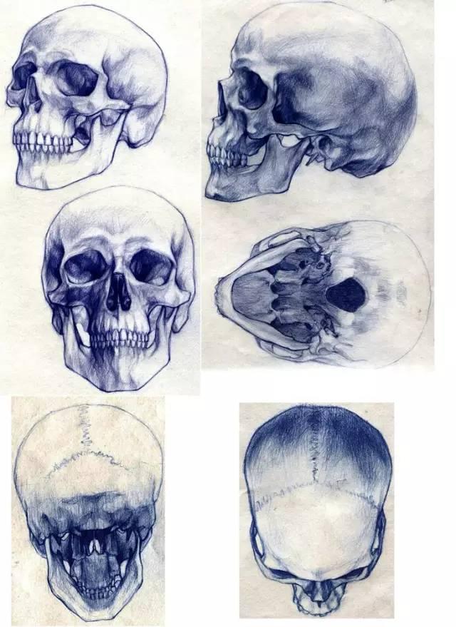 手绘素材 | 人体结构,不再难画?干货素材100张
