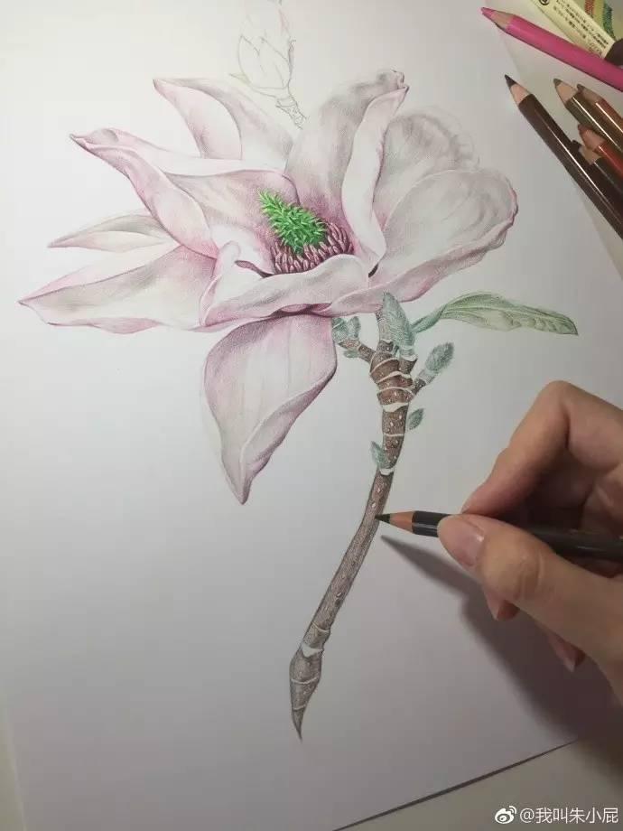 彩铅手绘:简单花卉