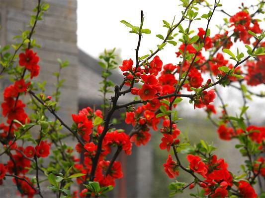 喜悦汇常识 赏花知花名,不负赏花情