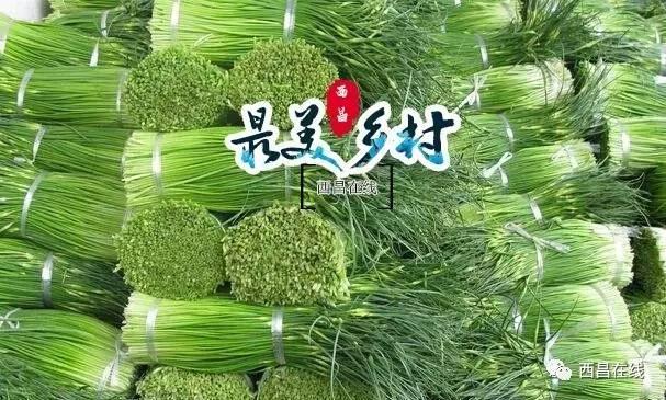 西昌市大兴乡有多少彝族人口_西昌市开元乡图片