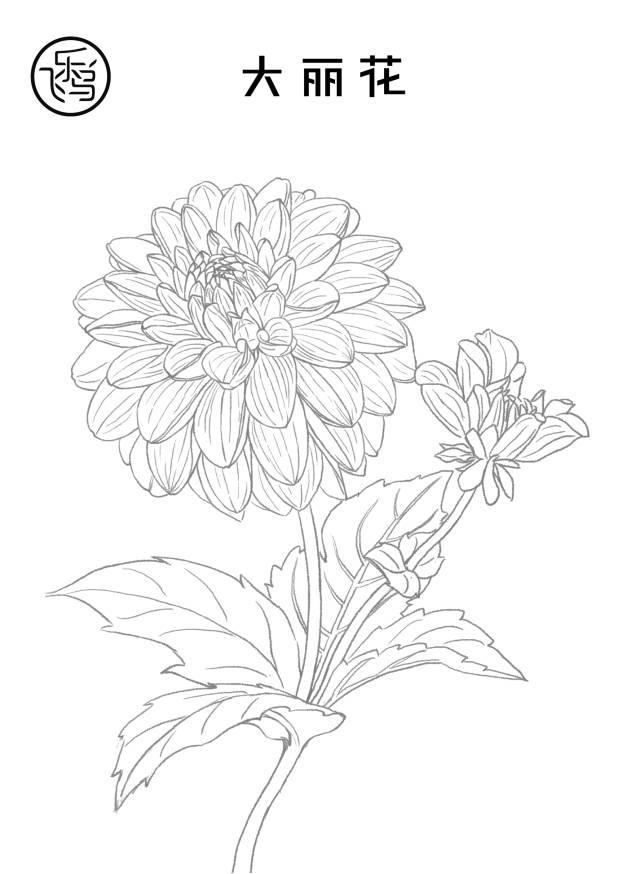 20张植物线稿素材 | 新手必备的练手小秘籍!图片