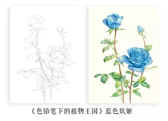 植物花朵彩铅画