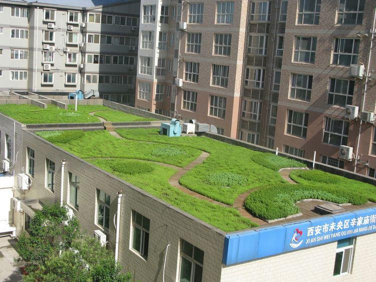 屋顶绿化_广州 屋顶 绿化_屋顶 绿化