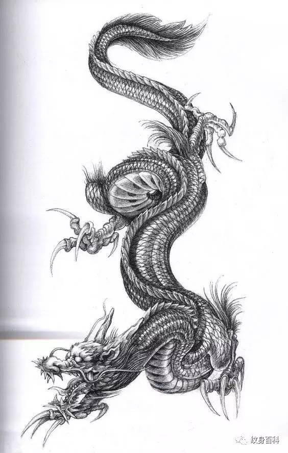龙纹身手稿