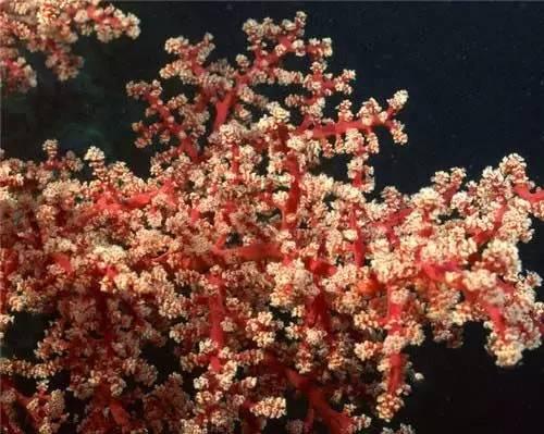 "Rose【惊艳的""海底花""】(7849) - roseyang888 - roseyang888的博客"