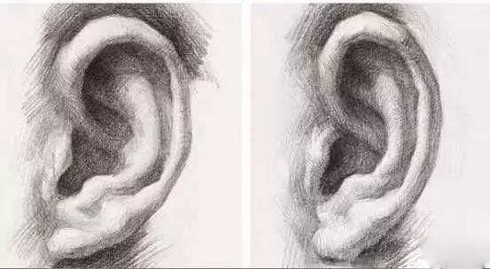 结构素描耳朵切面图