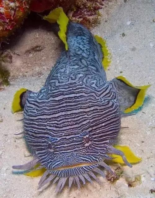 摄影欣赏 稀奇古怪的鱼图片