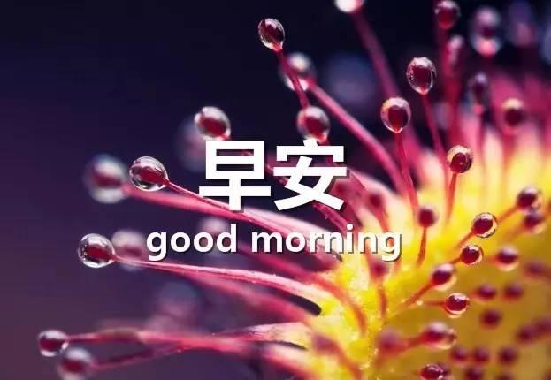 早上好的祝福语 早安祝福带图片