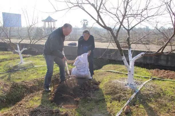 果树施肥有技巧,5大误区4大要领千万要记牢