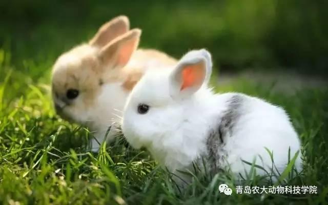 小白兔真可爱,两只耳朵竖起来做梦梦见尸鳖图片