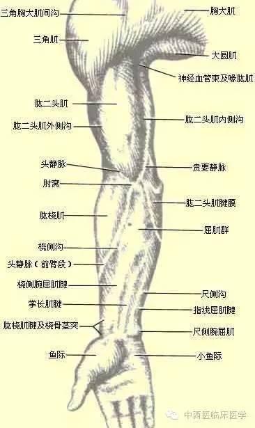 解剖体表标志