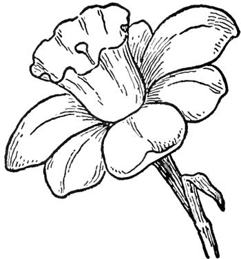 儿童简笔画 花儿朵朵开,多种常见花的绘画教程