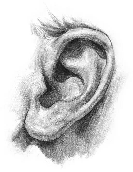 耳朵结构分析图