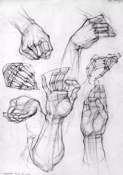 人体的肚子内部结构�_人体绘画结构详解,纯干货!