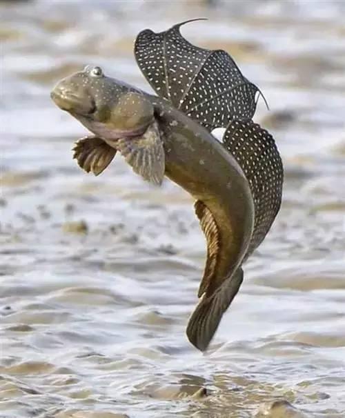 全世界最稀奇古怪的鱼几乎都在这里了图片