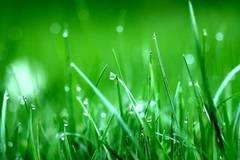 礼仪之邦,春风,鸿雁,穿越时空的思念,可念不可说,鬲溪梅令,在水一方