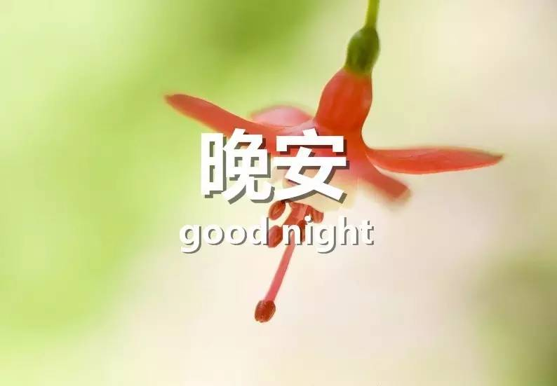 唯美晚安图片 晚安心语图片