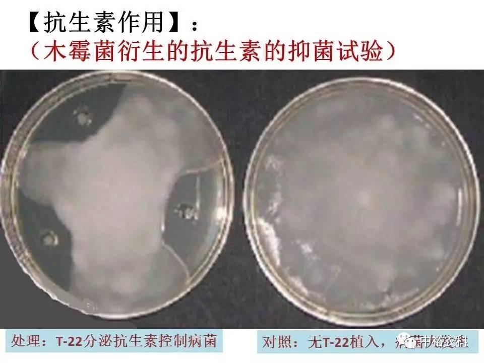 明矾加醋治咳嗽的原理_明矾晶体图片