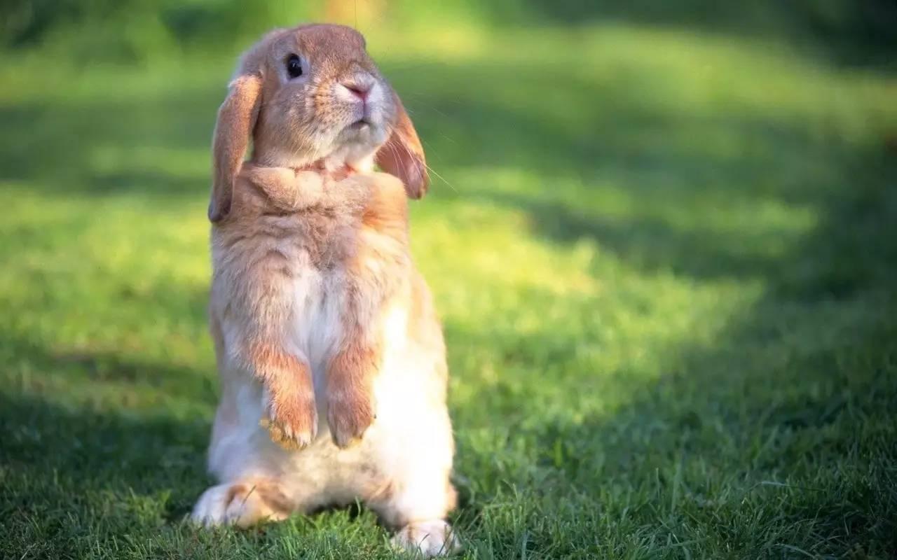 """我没完你:""""告诉""""~蠢萌的小兔子少的了鹦鹉菌有木有被瞬间花雨庭找动物图片"""