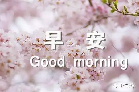 早上好祝福语大全 早上好问候语