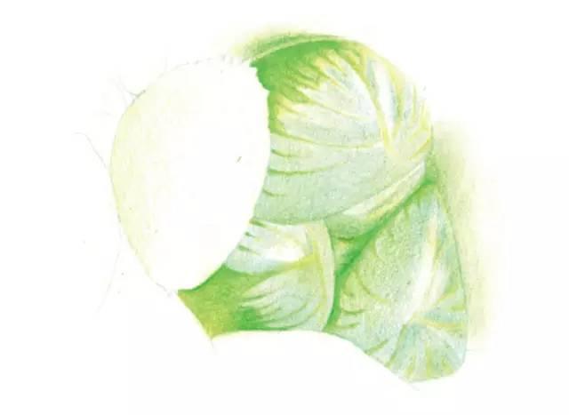 手绘多肉植物彩铅教程