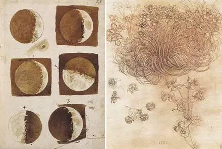 左图是伽利略绘制的月球表面草图,右图是达·芬奇画的植物研究图.