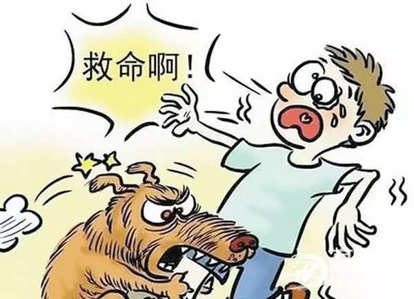 每年因不栓绳导致的狗伤事件数不胜数,为了狗狗和他人的安全,叔呼吁