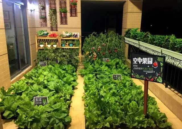 滁州碧桂园皖投· 中央名邸 已经为您准备好了带有空中花园的大平层图片