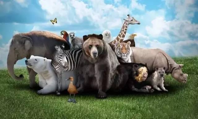 宿州野生动物园4月29日盛大开园 乐活50张门票免费送