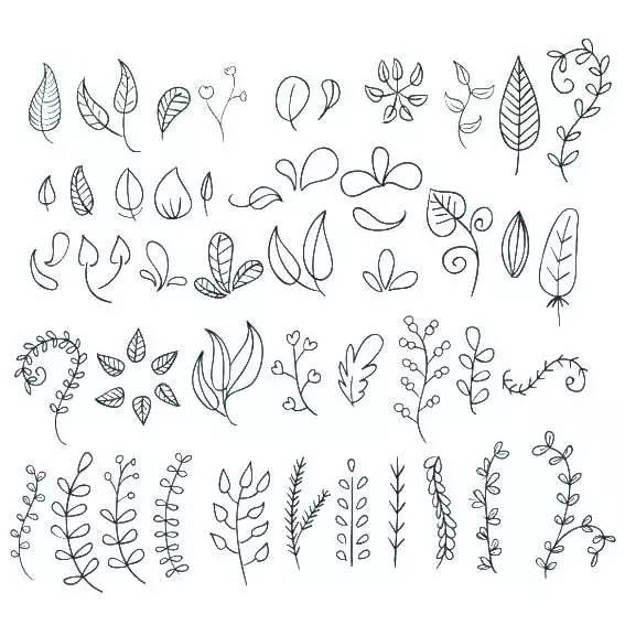 各种植物叶子简笔画 叶子简笔画 亲子简笔画大全