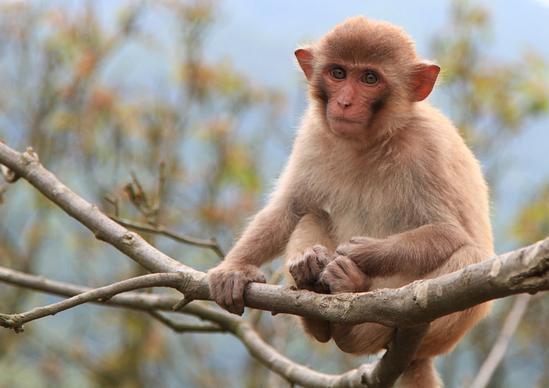 属猴的和什么属相最配_超简单 林正清老师教你如何找出命中贵人
