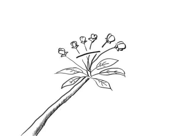北方果树疏花授粉手绘图解
