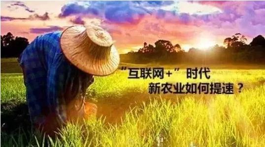 互联网附体后,中国农业会如何蜕变?