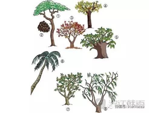 其它 正文   松树  松果  枫树  银杏树  橡树  椰子树  榆树  杨柳