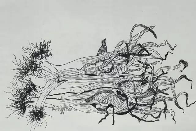 魅力线条 张檩的线描画社团