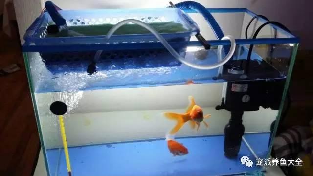 鱼缸怎样过滤水清