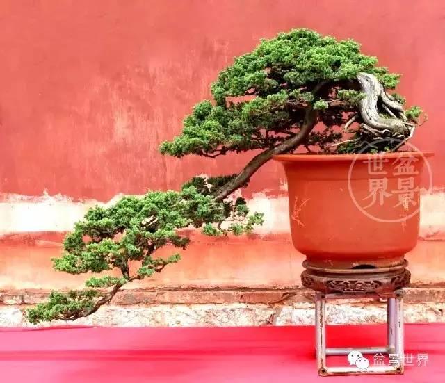 昆明 世博杯 中国盆景艺术精品邀请展将在五一期间举行